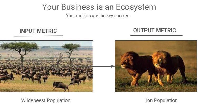 ecosistema serengeti
